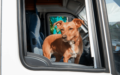Can Dogs Ride In A Fifth Wheel?