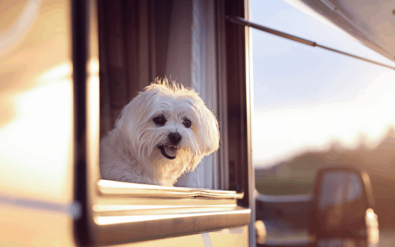 How to Take Your Dog On A Camping Trip