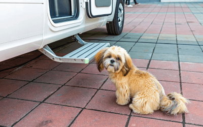 Is It Legal To Transport A Dog In A Trailer?