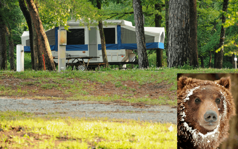 Are Pop Up Campers Safe From Bears